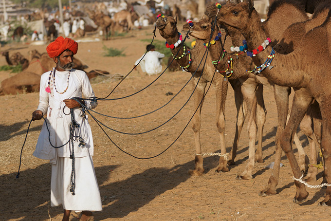 india-pushkar-camel-fair