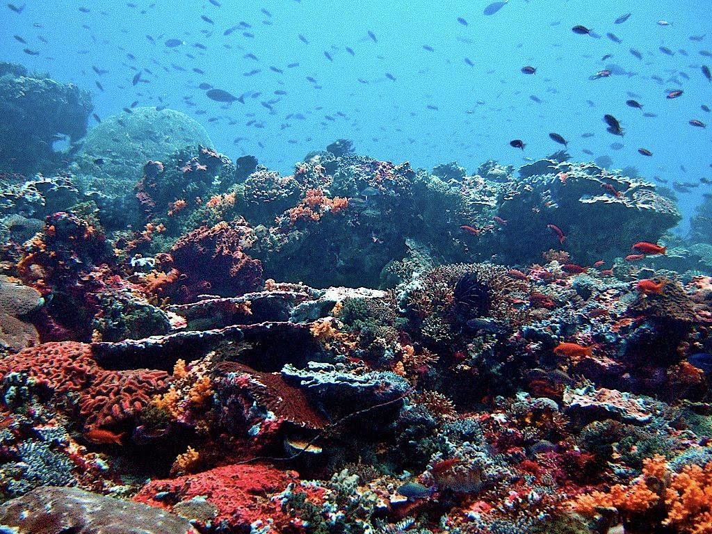 nusa-penida-diving